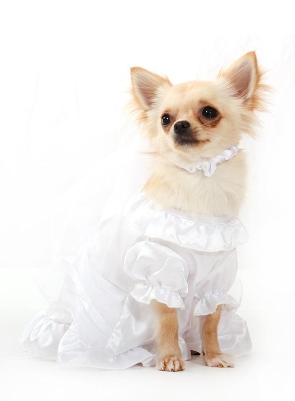 Bride Wedding Dress with Veil | Dog Clothes at Urban Pup